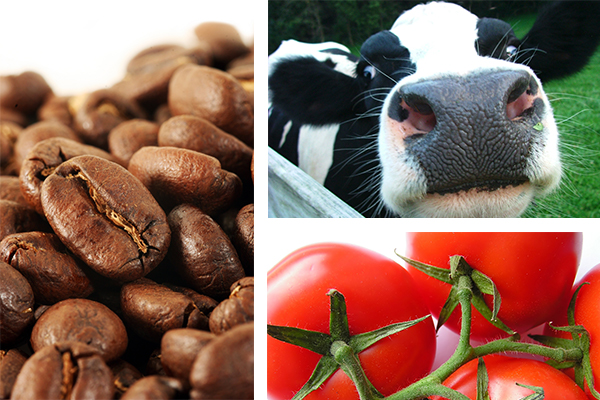 Coffee beans, a cow, and tomatoes